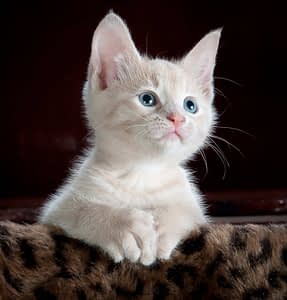 Katze Auflösung 72 PPI